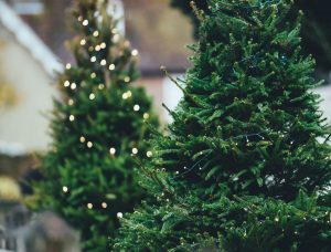Christmas Trees for sale at great prices!